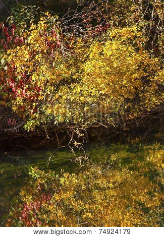 Yellow Red Leaves Fall Colors Green Water Reflection Abstract Wenatchee River Valley