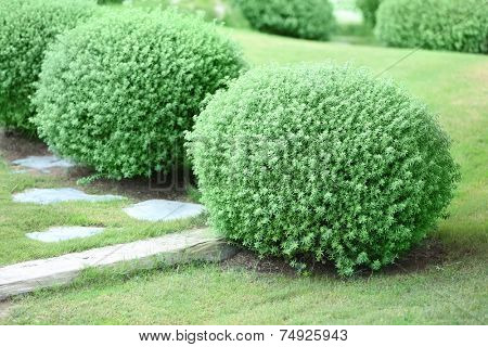 Beautiful lush bushes in garden
