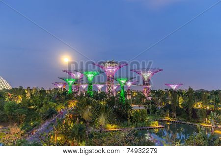 Night View Of Supertree Grove At Gardens By The Bay In Singapore