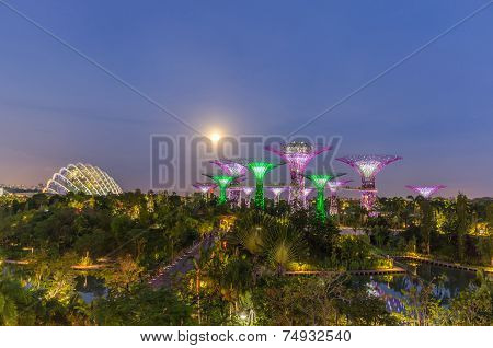 SINGAPORE - MARCH 16: Night view of Supertree Grove