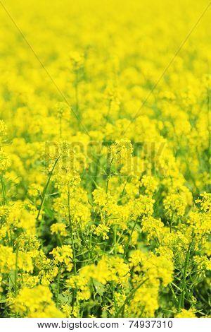 Beautiful rape in the field