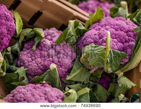 Pink cauliflower