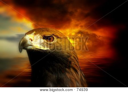 Golden Eagle And Sunset