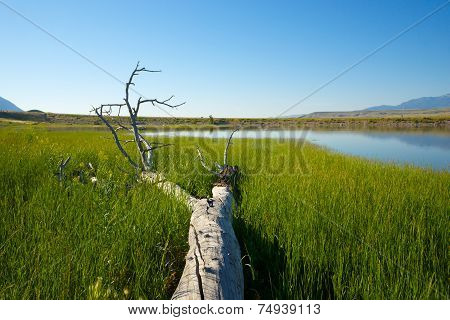 Fallen Tree In Marsh