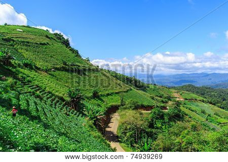 Tropical Forest And Mountain Ranges
