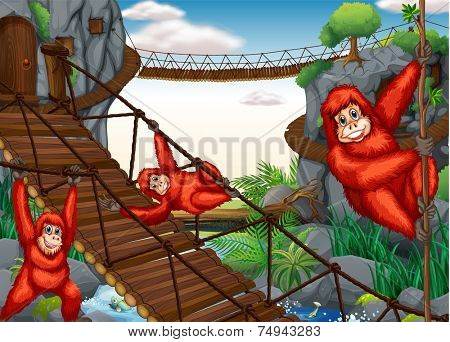 illustration of chimpanzees hanging on the bridge
