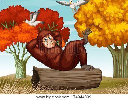 illustration of an orangutan relaxing on a log