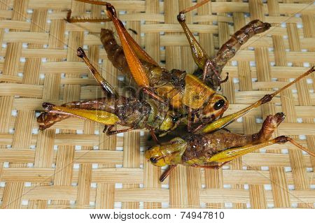 Crispy Fried Insects With Basketwork Background