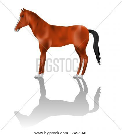 Detailed horse vector illustration