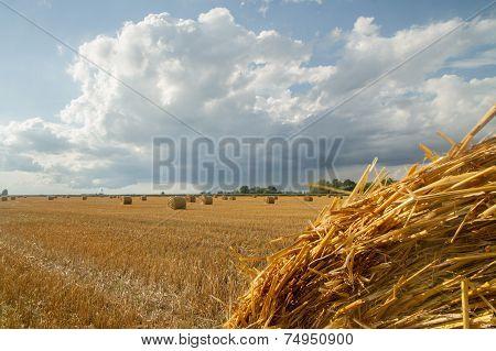 Large Haystack