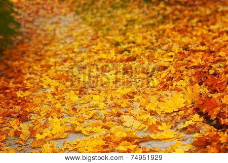 Path covered with yellow autumn leaves