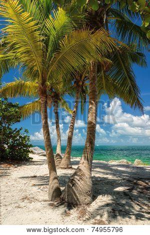 Palm trees on a beach, the sea.