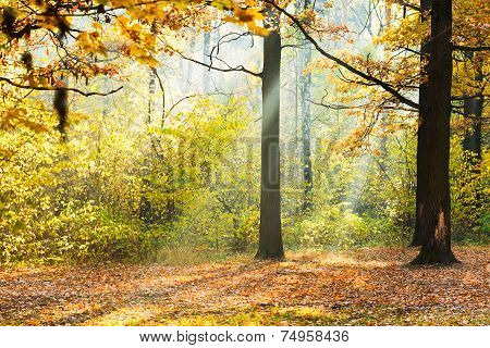 Sunlight Lit Glade In Autumn Forest