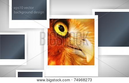 eps10 vector photo realistic owl background