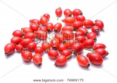 Rosehips isolated on white background