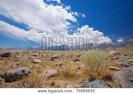 Green Shrub In High Desert