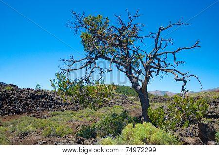 Lonely Tree In Idaho
