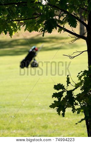 Golfbag on golfcourse green, focus on tree in front