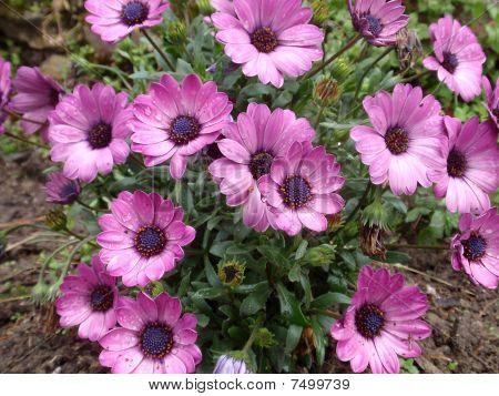 flower111