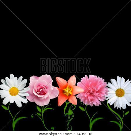 flowers in a line