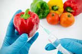 pic of genetic engineering  - Man with gloves working with pepper in genetic engineering laboratory - JPG
