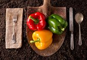 picture of rich soil  - Organic farm to table healthy eating concept on soil background - JPG