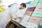 picture of bee keeping  - Side view of male beekeeper tying rope to truck with stacked honeycomb crates - JPG