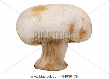 Close-up of an edible mushroom