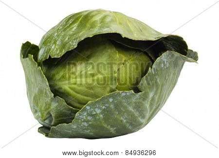 Close-up of a green cabbage