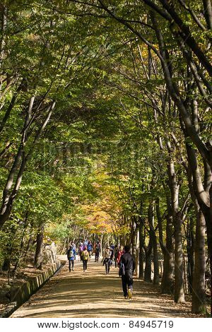 Mungyeong, Korea - October 14, 2014: View Of Mungyeongsaejae Pass In Autumn
