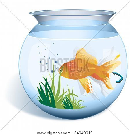 Close-up of a goldfish in a fishbowl