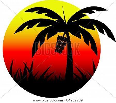 Banana tree Sunset