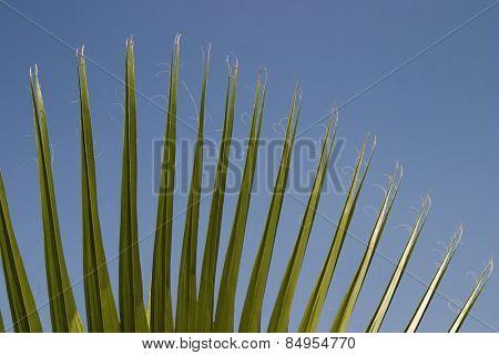 Close-up of palm leaves, Garden of Five Senses, Saidul Ajaib, New Delhi, India