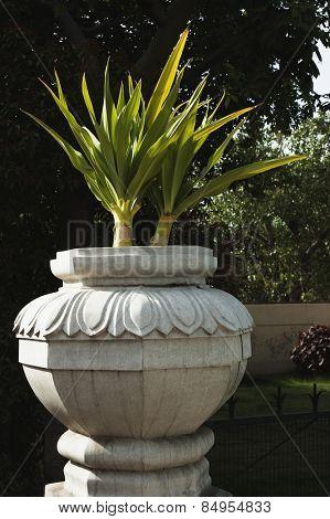 Plants in urn in a garden, New Delhi, India