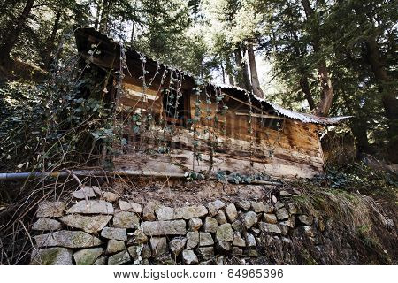 Vines on a hut in a forest, Manali, Himachal Pradesh, India