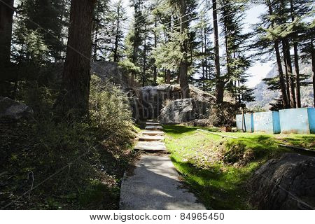 Pathway in a forest, Manali, Himachal Pradesh, India