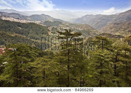 Trees on mountains, Shimla, Himachal Pradesh, India