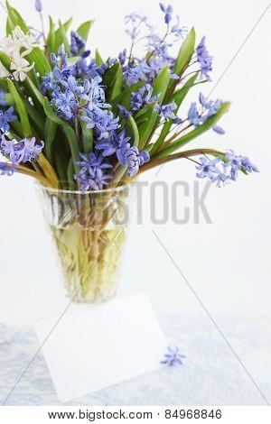 Blue Primroses, Scilla