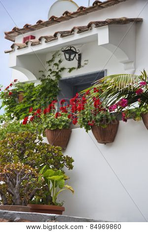 Potted plants in front of a building, Ravello, Amalfi Coast, Salerno, Campania, Italy