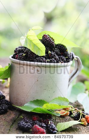 Fresh Mulberries  In Mug
