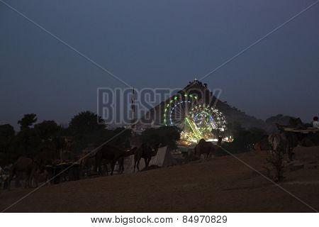 Pushkar Camel Fair at night, Pushkar, Ajmer, Rajasthan, India