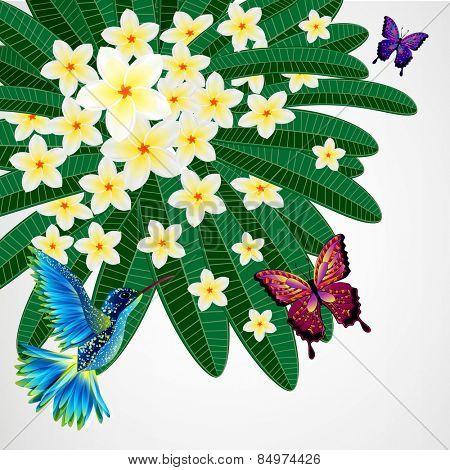 Floral design background. Plumeria flowers with birds, butterflies.