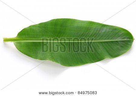 fresh whole banana leaf isolated on white background