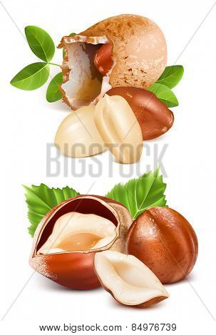 Hazelnuts and peanuts with leaves and kernels. Vector illustration