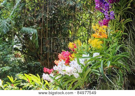 Group Of Blooming Orchid Flower.