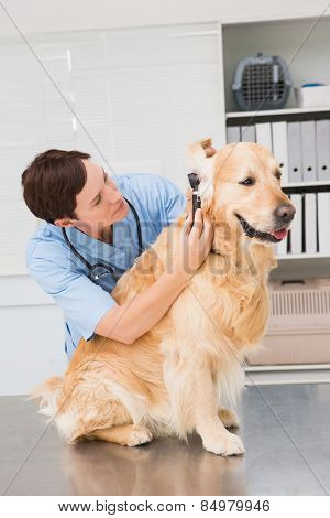 Veterinarian using otoscope to dog in medical office