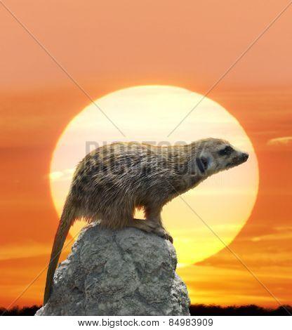 Digital Painting Of Meerkat Against  Sunset