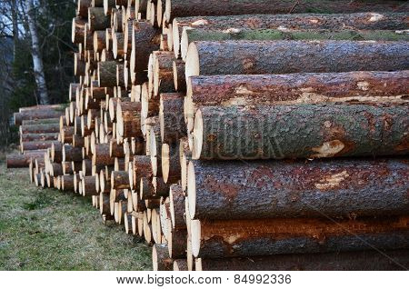 Felled Trees, Ready For Transportation