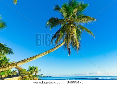 Paradise Getaway Overhanging
