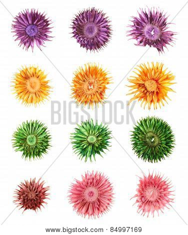 Dried medley potpourri flowers isolated